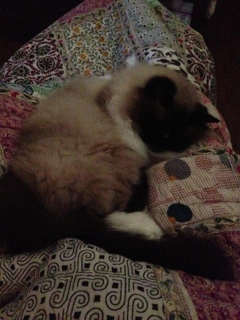 taby sleeping