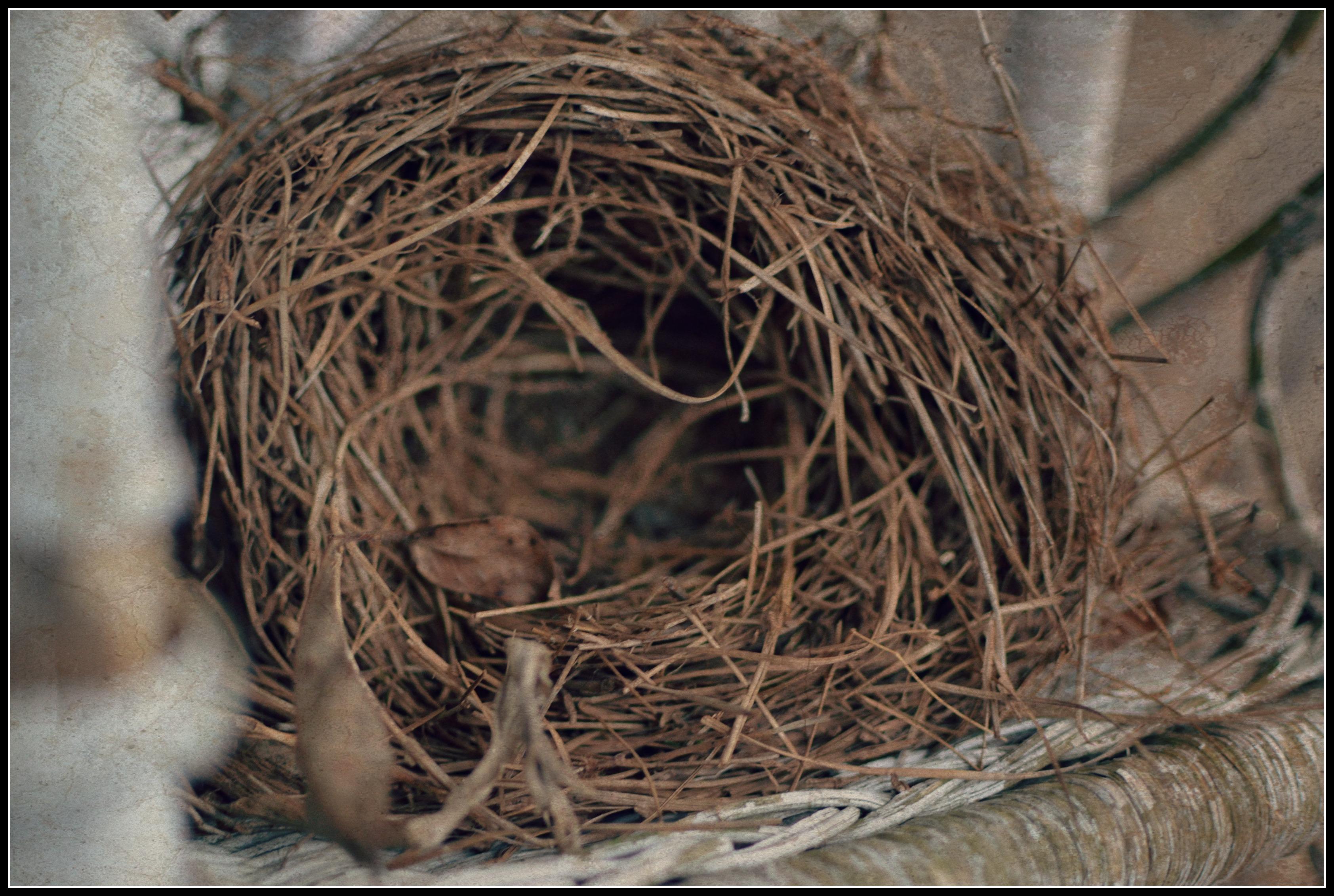pine straw nest