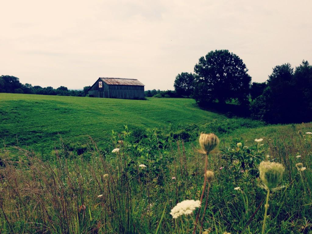 barnquiltfield