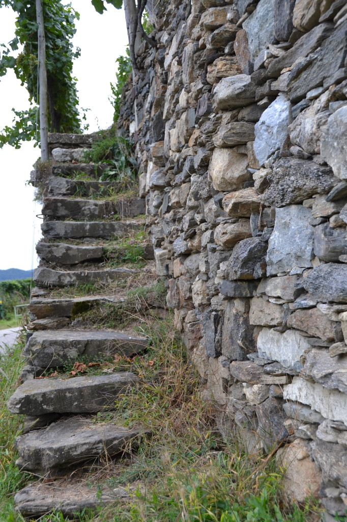 steps to a vineyard