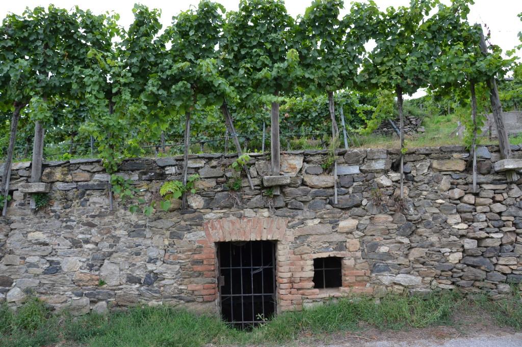 cellar under a vineyard