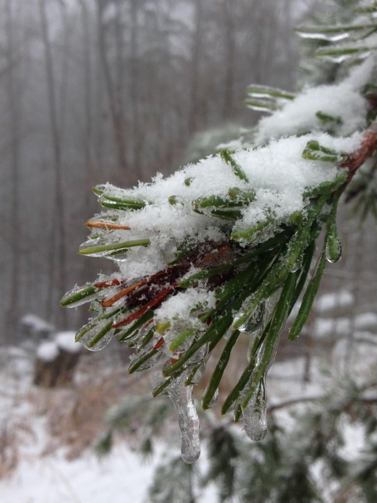 snowing pin