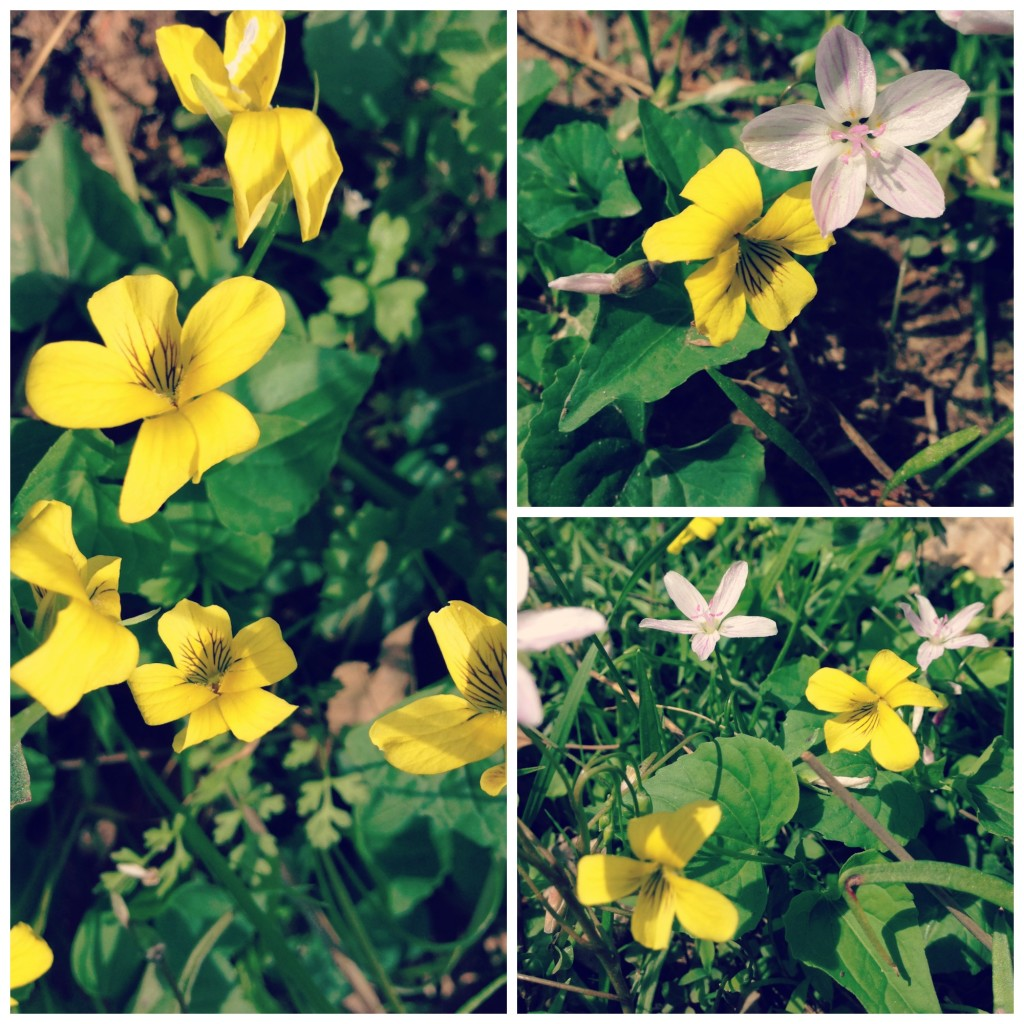 yellowviolets