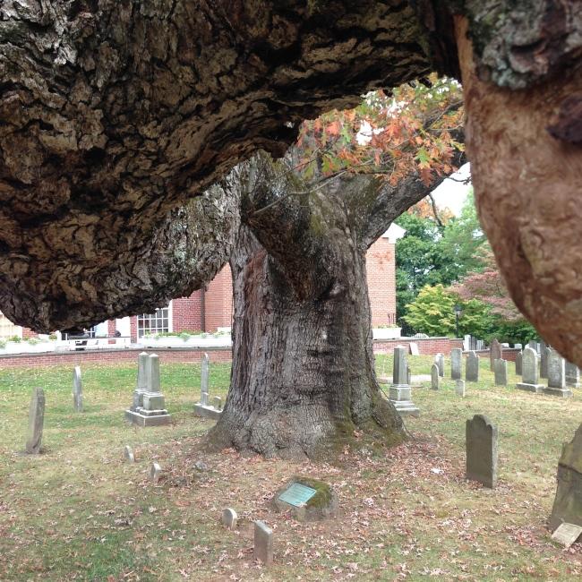 basking ridge tree