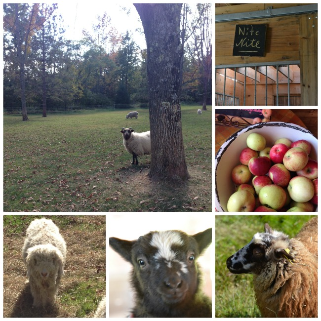 farmcollage