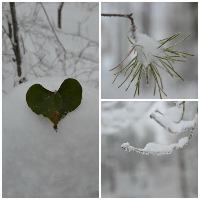 snowpictures