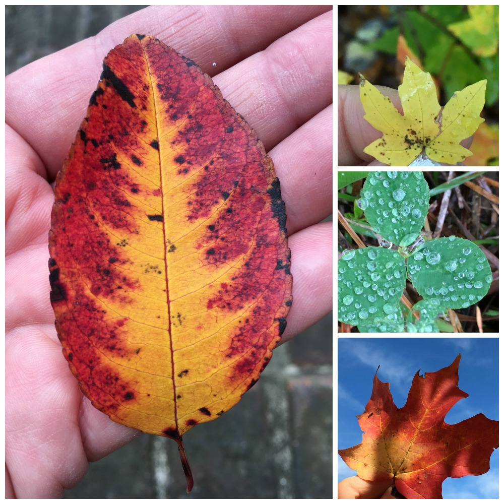 leavesofbeauty