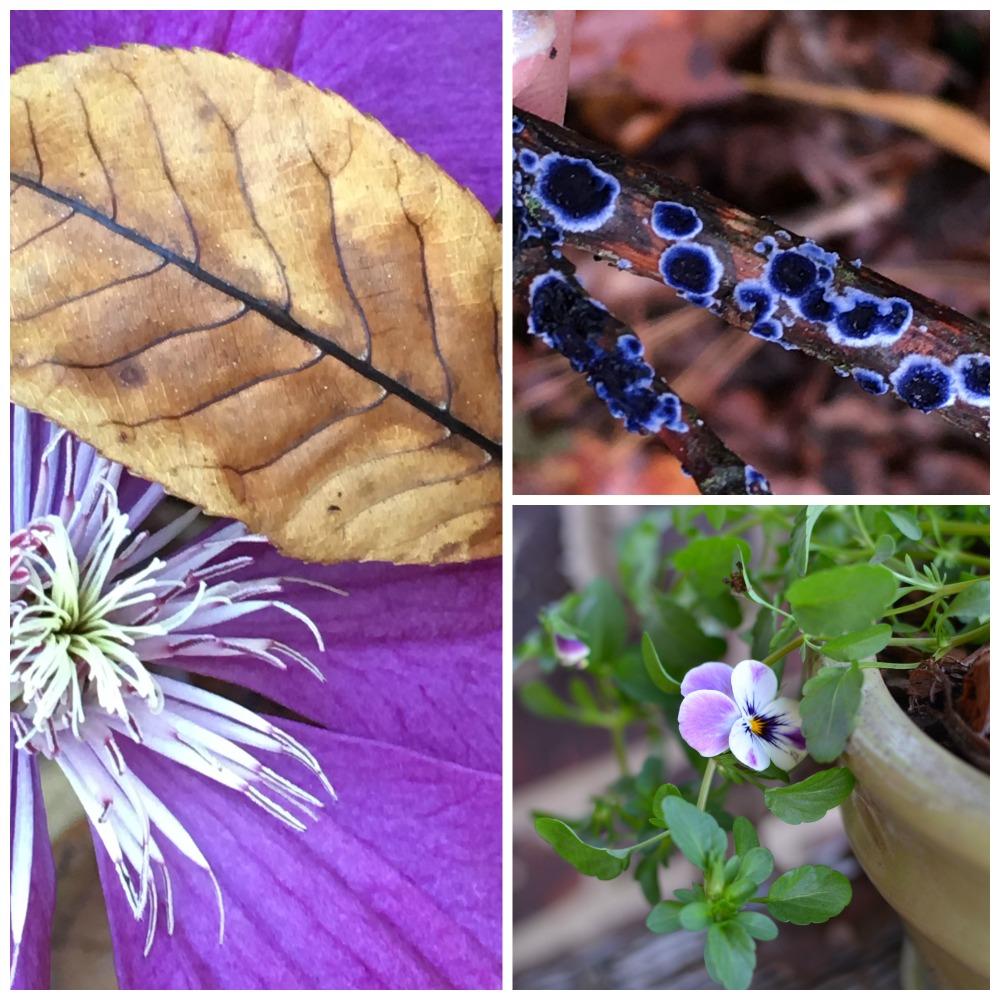 purplefall